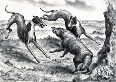 Hounds and Coyote